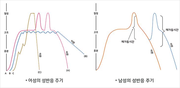 성반응주기 그래프